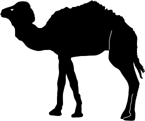 Camel-Silhouette