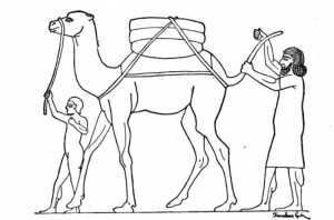 camel-with-man-coloring-page